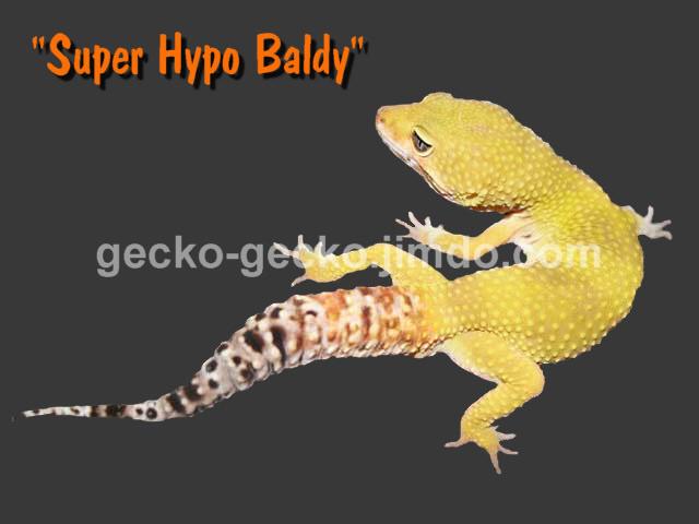 Super Hypo Baldy