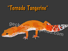 Tornado Tangerine