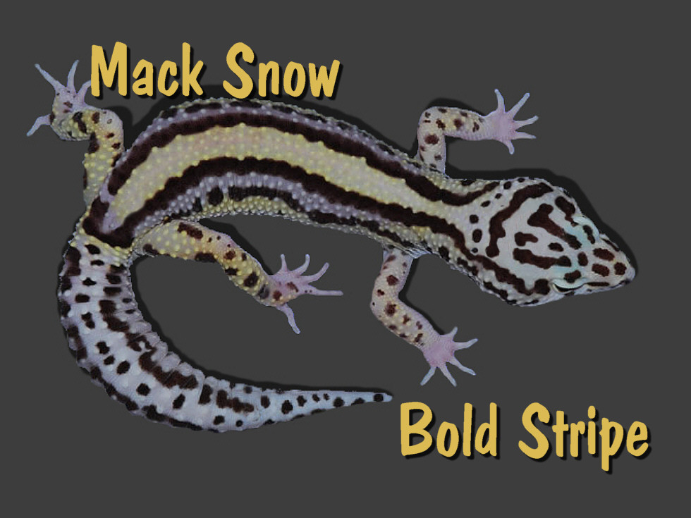 Mack Snow bold Stripe