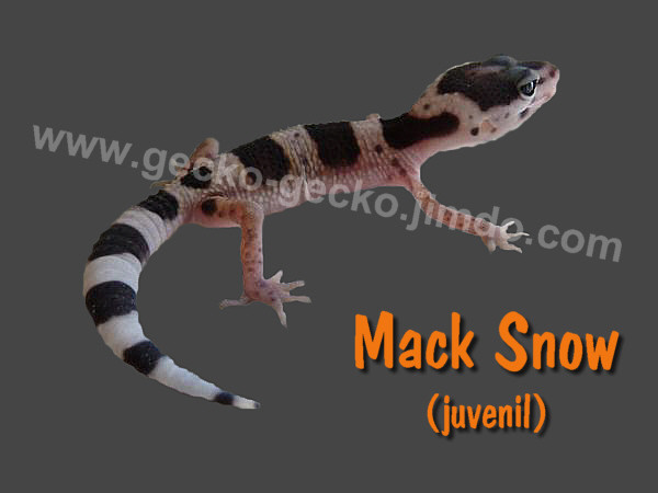 Mack Snow juvenil