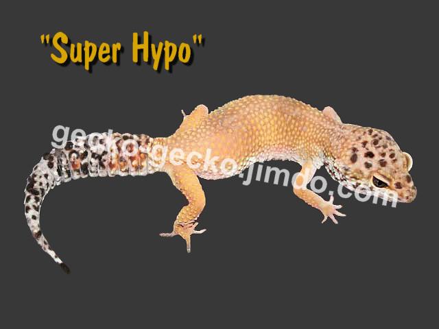 Super Hypo