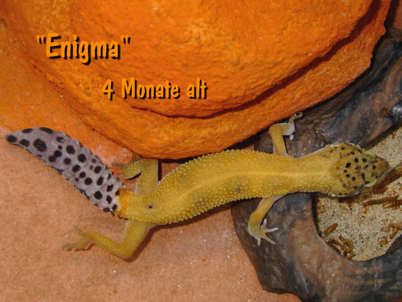 Enigma juvenil