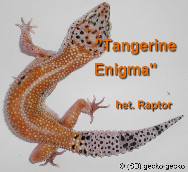 Tangerine Enigma