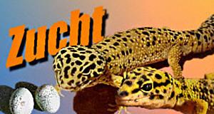 Logo-Zucht 300x160