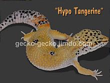 Hypo Tangerine