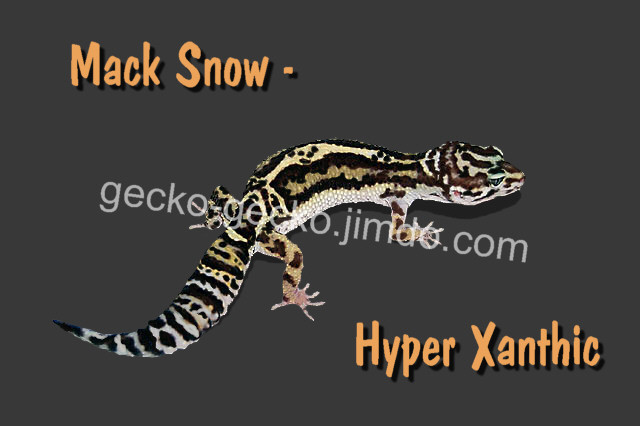 Mack Snow Hyper Xanthic