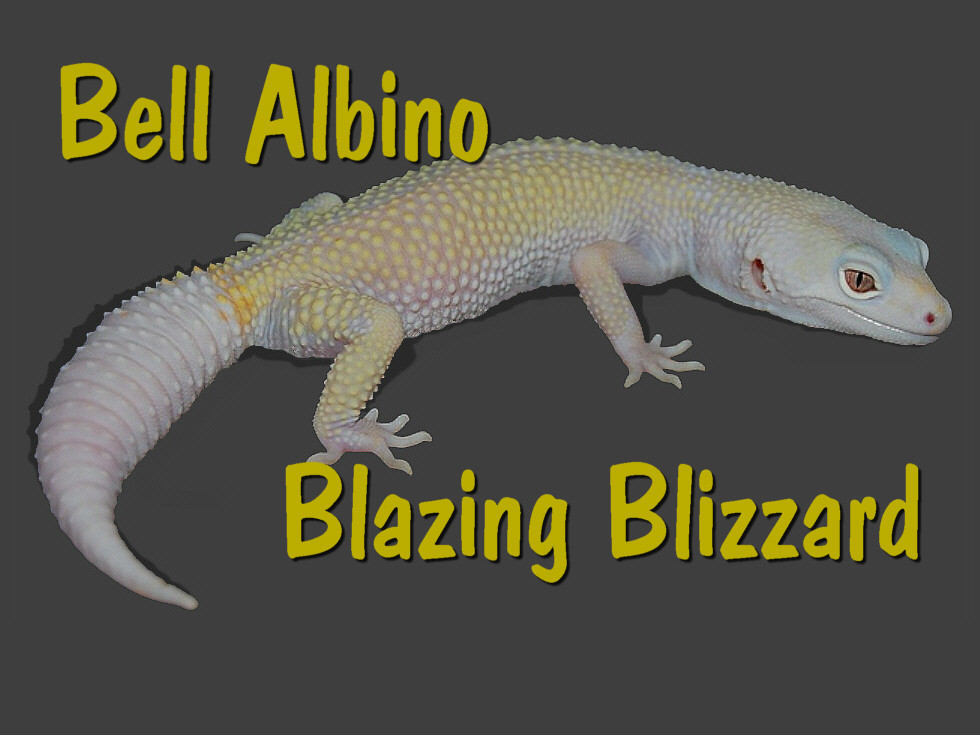 Blazing Blizzard