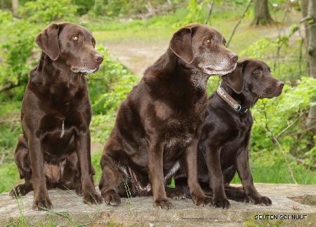 Die 3 Generationen :  li. Seuten Schnuut Brave Käthe / Oma : Alba vom Behmerhof / re. Seuten Schnuut Die Lilith