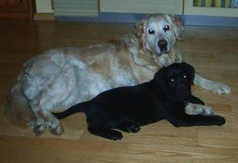 Das letzte gemeinsame Foto von Ida + Marple - wir werden dich nie vergessen !!!!!