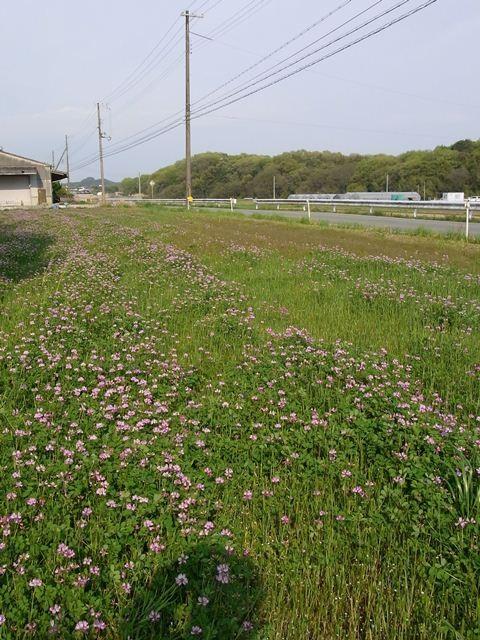 Kasai, Hyogo (Honshu)
