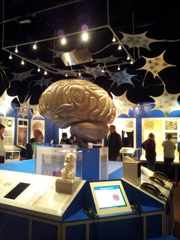 Ausstellungsraum Gehirn, © Regina Betz