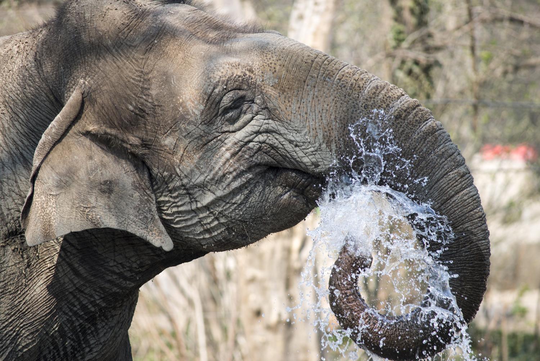Elefant beim Wasserspaß, Aufnahme: Karl Broeseke