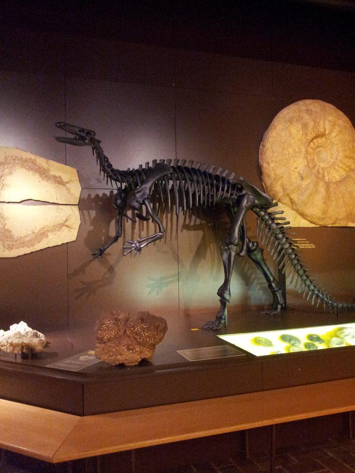Dinosaurier, © Regina Betz