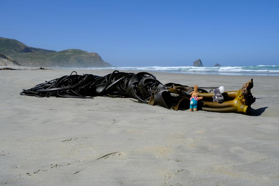 Sonderbare Wesen am Strand