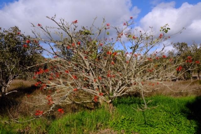 Rawene - Am Mangrovenwald