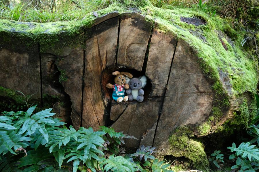 Die neuen Hobbits