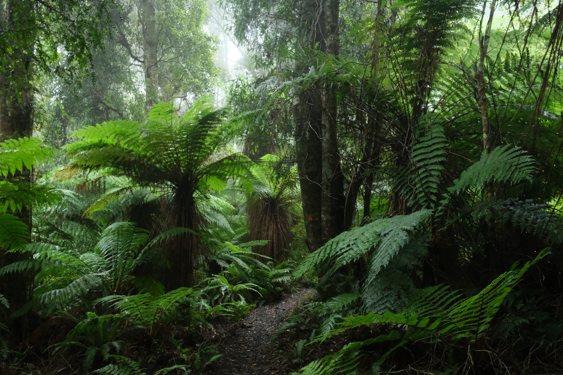 Catlins Forest