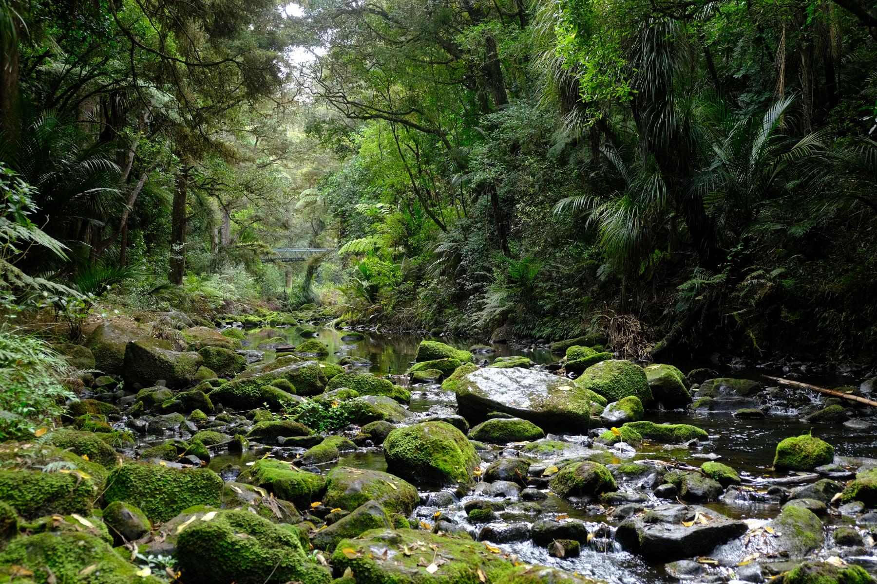 Whangarei Falls Track