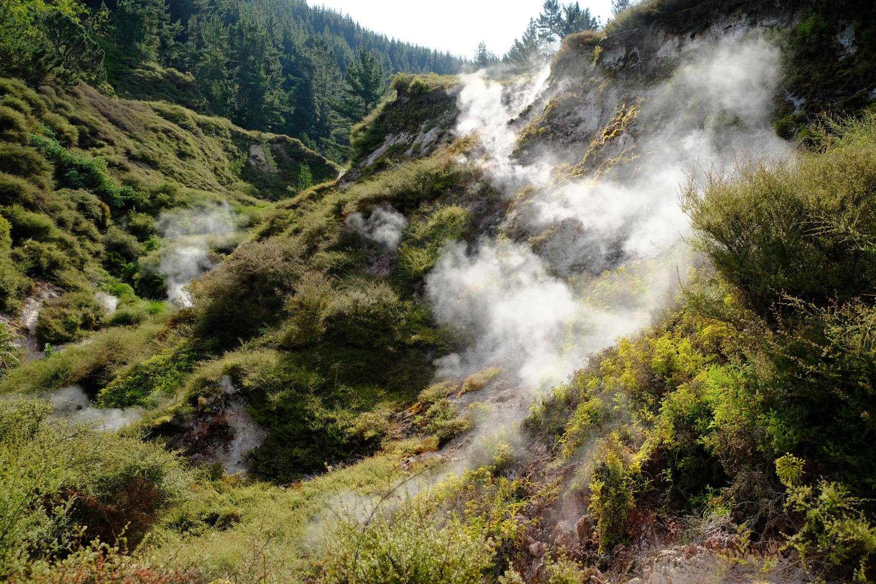 Wairakei Thermal Valley