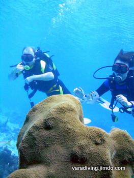 diving the caribbean cuban sea