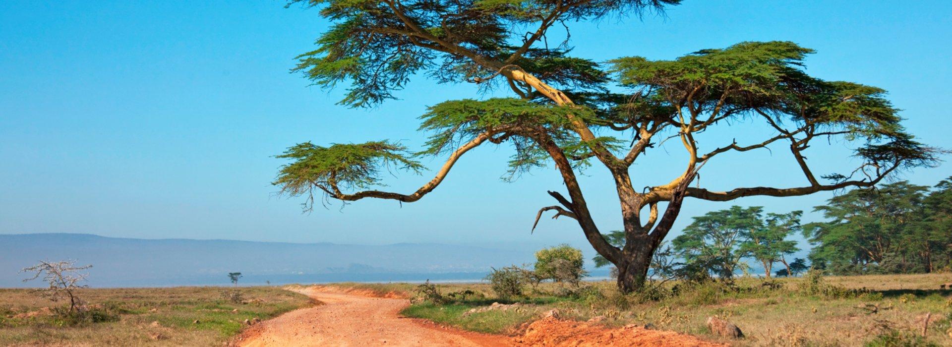 Africa. Il fashino della savana.