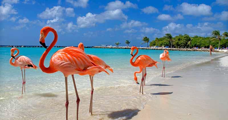 Caraibi. Aruba. I colori di Caraibi.