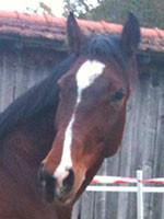 Anima-Balance: Pferd «Waluscha», CH-Warmblut, *2000