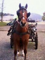 Anima-Balance: Pferd «Laura», Freiberger, *2008