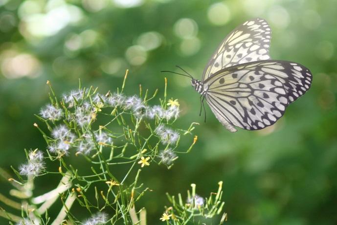 Naturflächen schützen