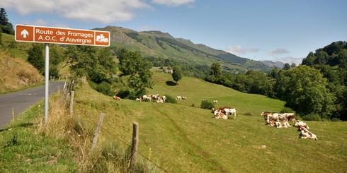Sur la route des fromages d'Auvergne