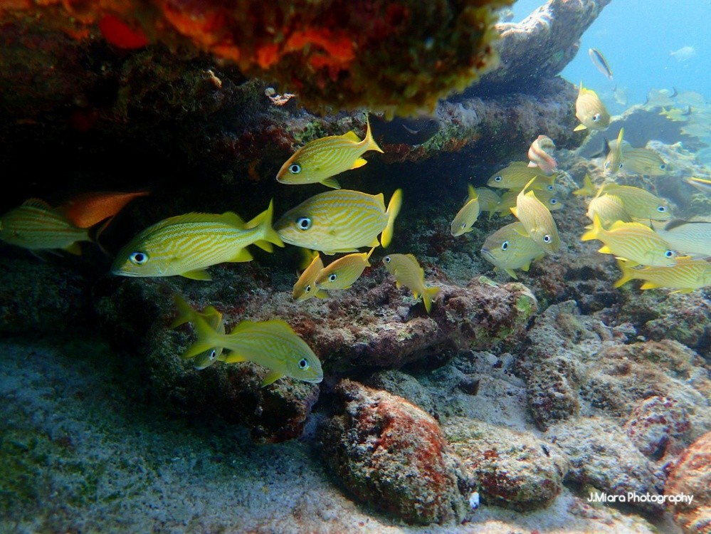 Gorette, snorkling Yucatan