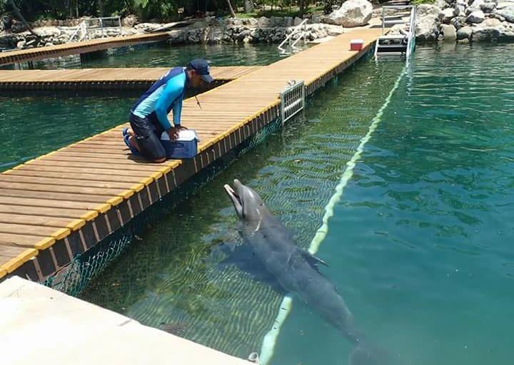 L'attraction à touristes! la nage avec les dauphins.....