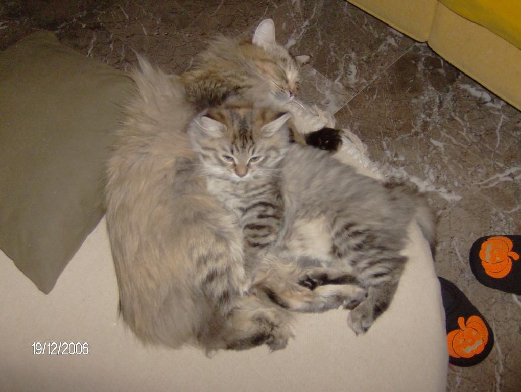 Rara Avis e mamma Otrada