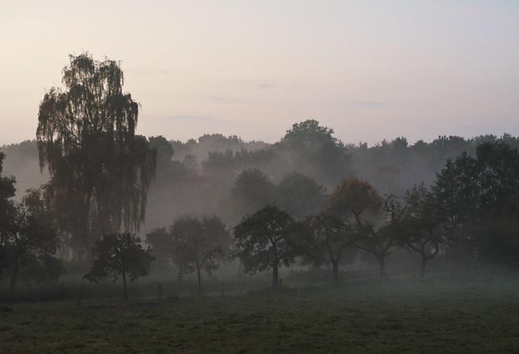 Mist bedekt de appelbomen
