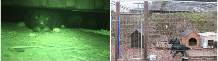 Bild 1: Ein eingesperrter und angeketteter Hund in der dunklen Scheune Bild 2: Der tierschutzwidrige Hundezwinger aus einfachem Baugitter, der vorübergehend benutzt wurde (Quelle: PETA)