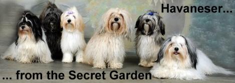 Havaneser from the Secret Garden
