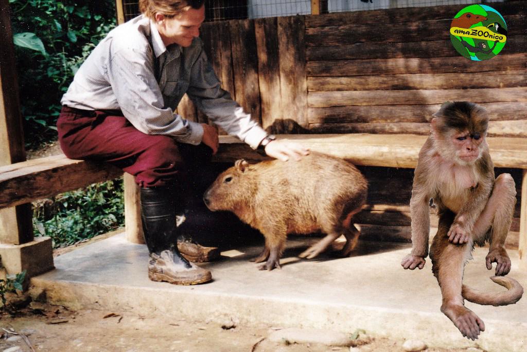 Capybara+kleines Äffchen