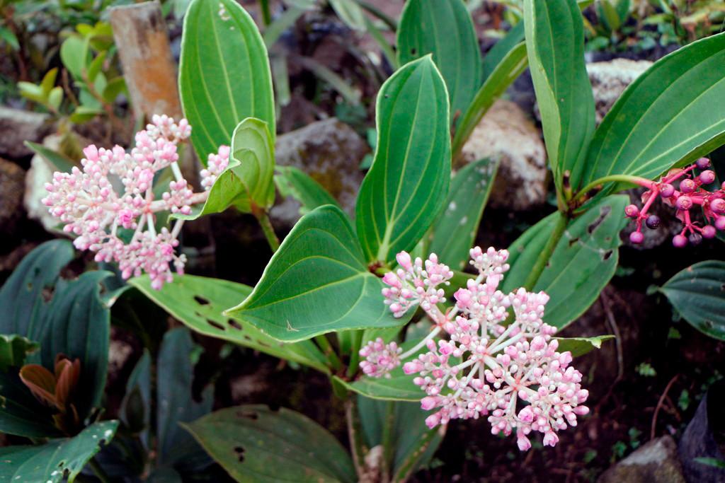 Ich bin kein Botaniker, darum hier nur die Fotos ohne Namen dieser Pflanzen! Die Hauptsache, sie sind schön an zusehen!