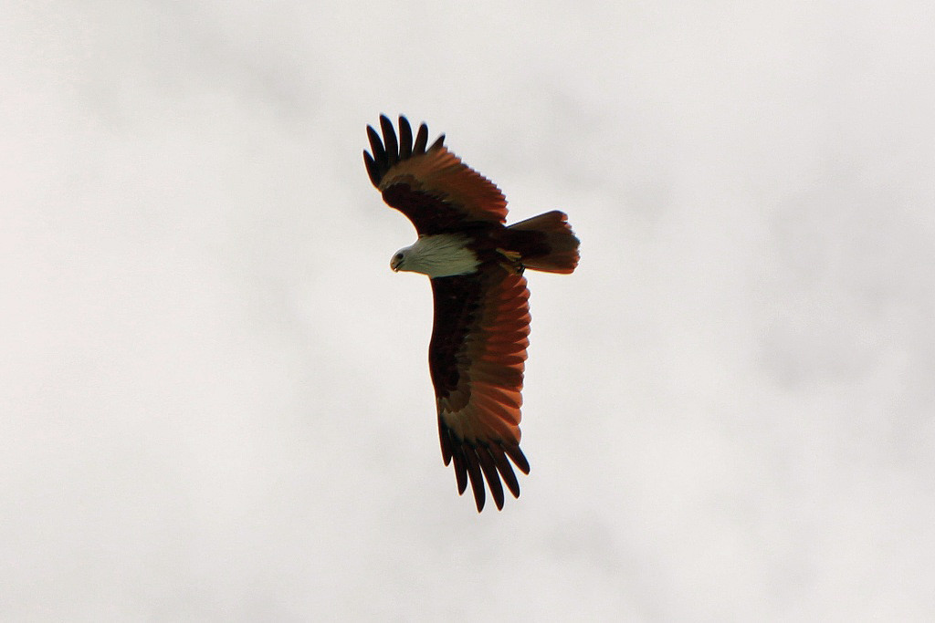 Über uns ein Seeadler, der Ausschau nach unvorsichtigen Fischen hält, ein majestätischer Anblick!
