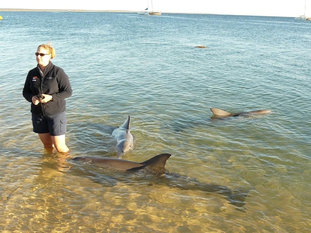 """Jeden Morgen ab ca. 7:00 Uhr findet hier wohl die in der Welt einzigartige Attraktion der Hautkontaktierung mit wilden Delphinen, also ein soetwas wie ein """"Streichel Delphinzoo"""" - Bild ist verlinkt !"""
