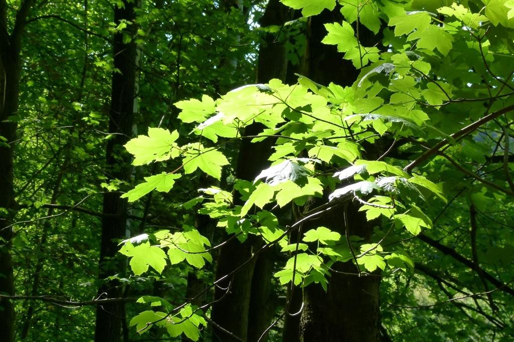 Das Sonnenlicht taucht die Blätter in ein strahlendes Grün!