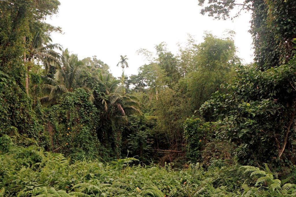 Undurchdringlich, so scheint, es ist der Regenwald!