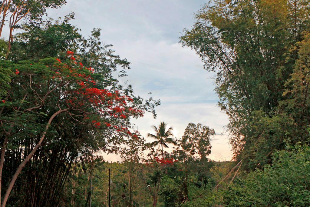 Die Sonne versinkt so langsam im dichten Blättermeer des Regenwaldes!