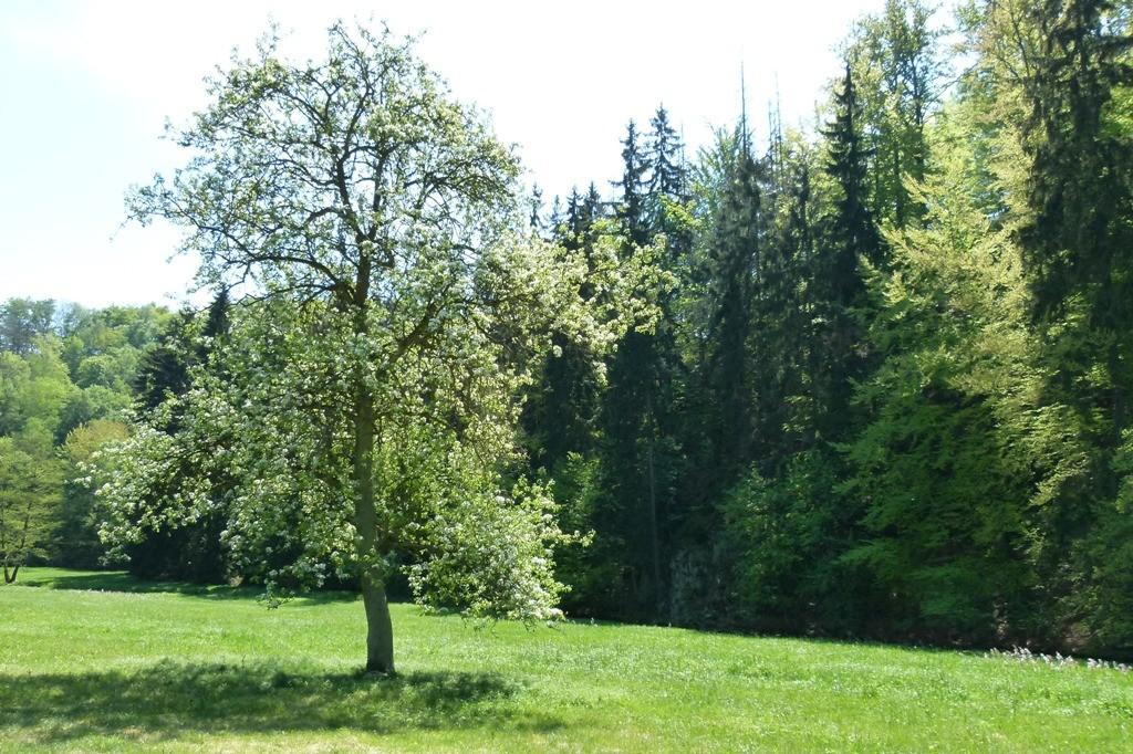 Sieht dieser Baum nicht sehr schön aus, so ganz allein auf der Wiesenaue.