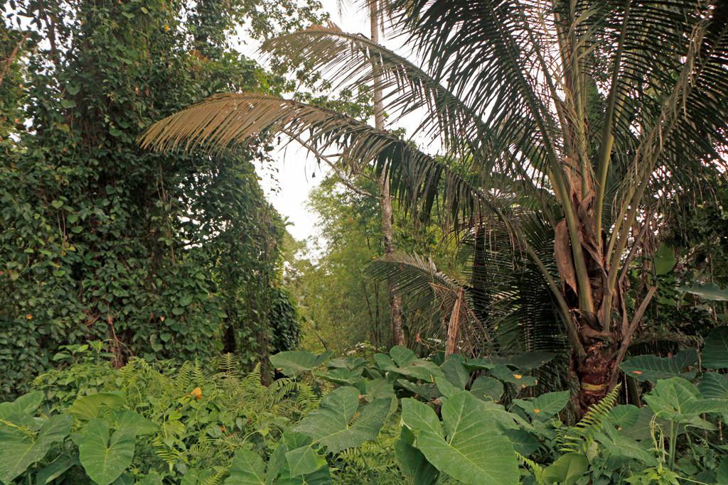 Dicht bei dicht steht hier die Vielfalt der exotischen Pflanzenwelt!