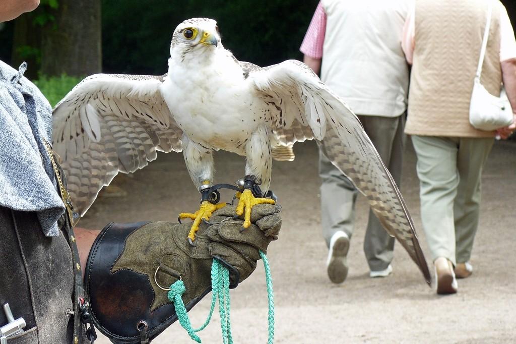 ..und hier der Falke in Pose!