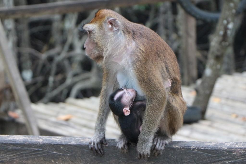 Das Kleine schmiegt sich fest an Mutters Brust!