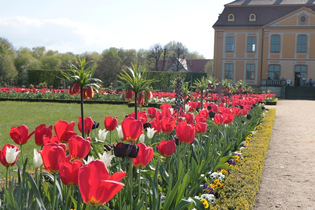 ...Blumen und Blütenpracht im Schlossgarten