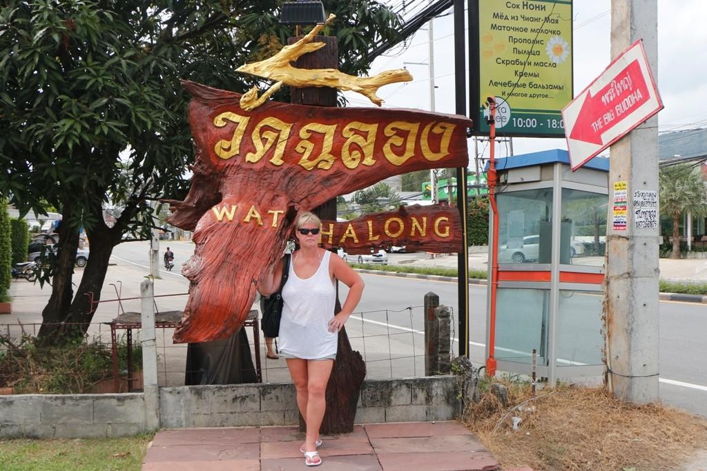 Cattl vor dem Watt am Hinweisschild zum Wat Chalong