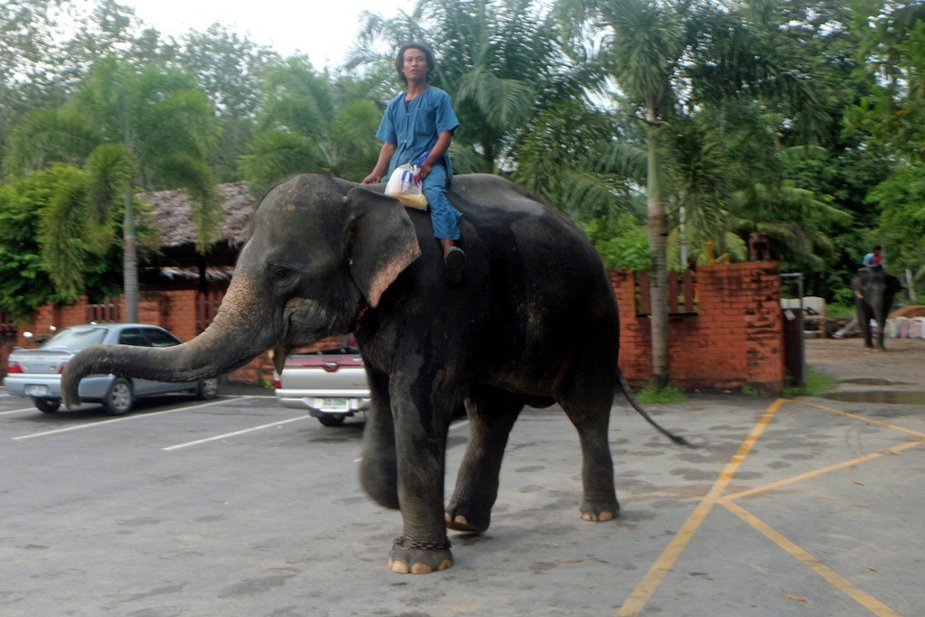 Nach getaner Arbeit können beide Elefant und Mahut endlich Feierabend machen!